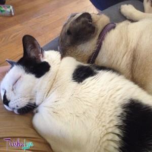 Lunchbox & Winston Snuggling